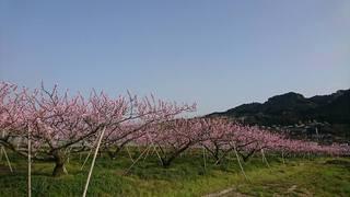 お花見�D.jpg
