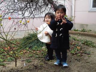 中庭の梅�B.JPG