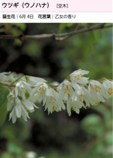 卯の花.png