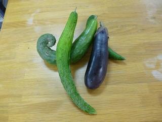 夏野菜たち�A.JPG