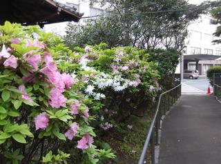 春爛漫�C.JPG