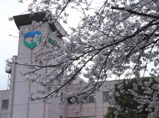 桜だより�G.JPG