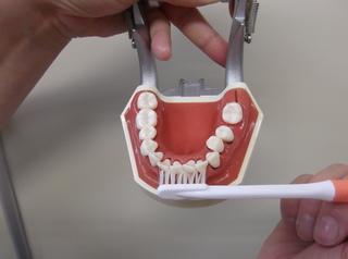 歯�F.JPG