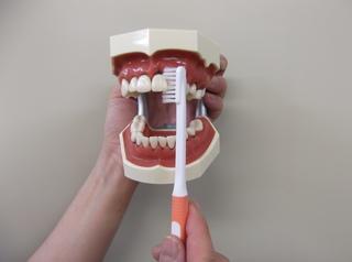 歯�G.JPG