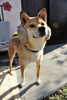 犬4.jpg