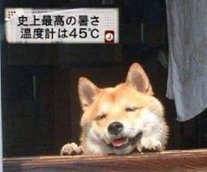 犬5.png