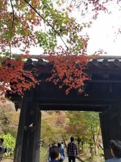 秋を感じに�A.jpg