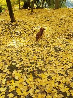 秋を感じに�B.jpg