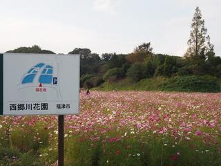 秋桜�@.JPG