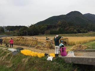 米作り�B.JPG