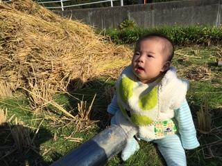 米作り�C.JPG