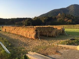 米作り�D.JPG