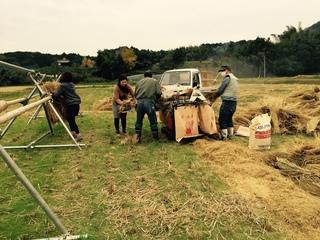 米作り�E.jpg