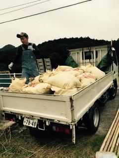 米作り�F.JPG