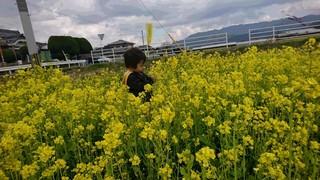 菜の花�@.JPG